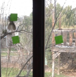 bird at window 3
