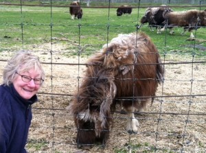 Me and musk ox
