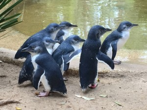 penguins at nature preserve
